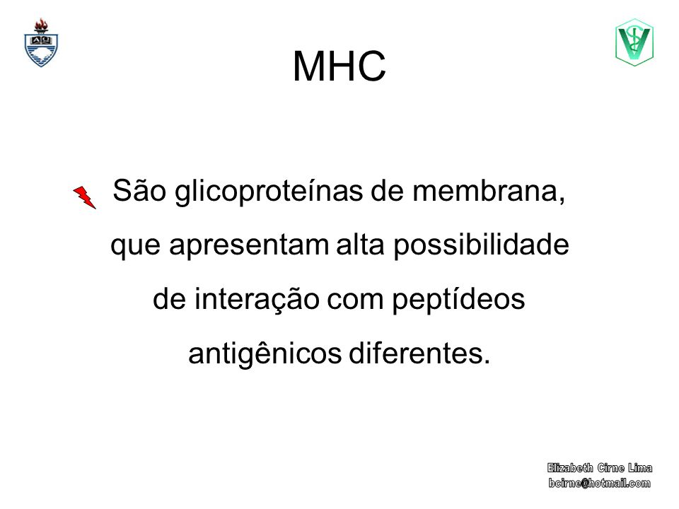 MHC São glicoproteínas de membrana, que apresentam alta possibilidade de interação com peptídeos antigênicos diferentes.