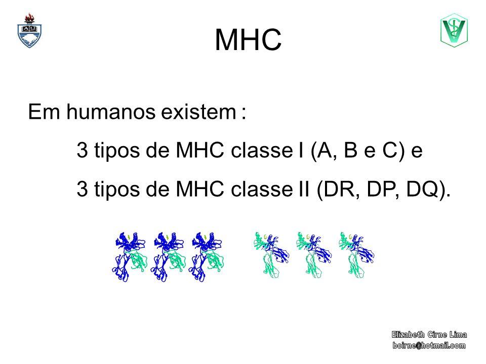 MHC Em humanos existem : 3 tipos de MHC classe I (A, B e C) e
