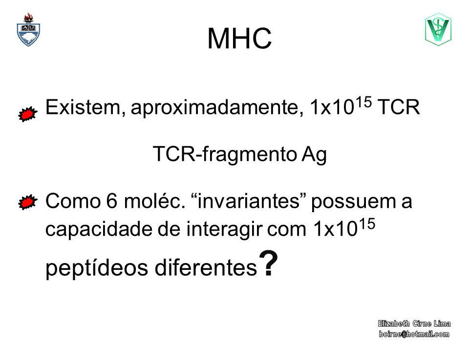 MHC Existem, aproximadamente, 1x1015 TCR TCR-fragmento Ag