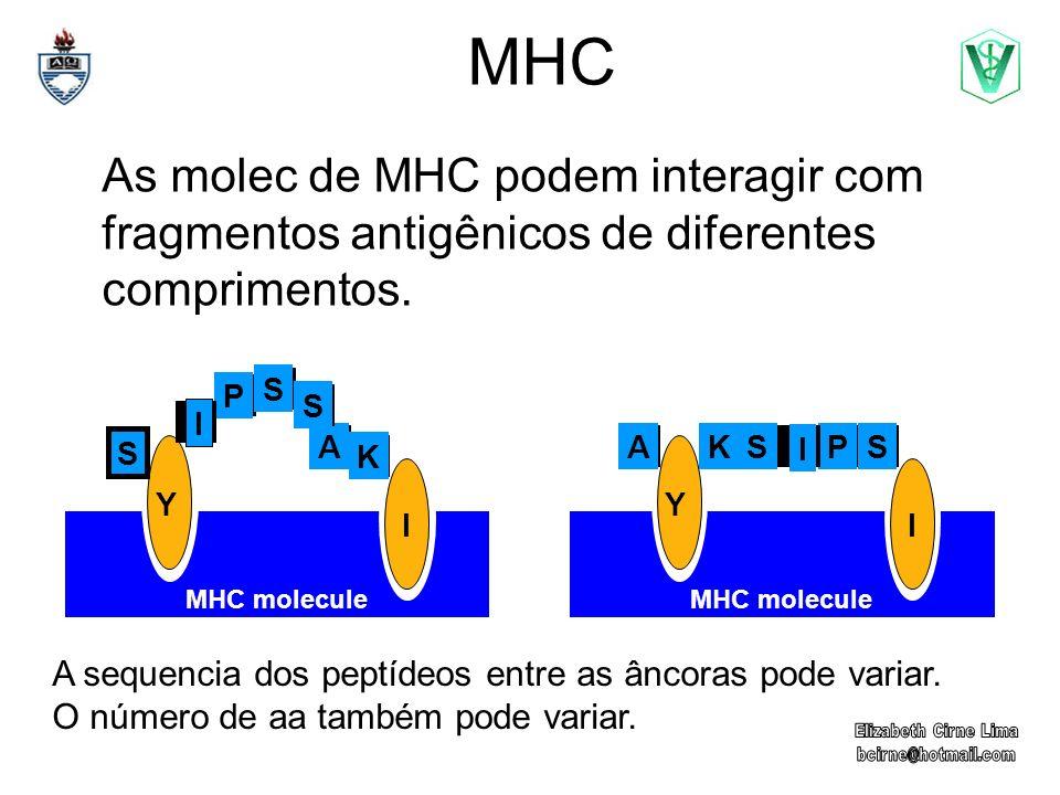 MHC As molec de MHC podem interagir com fragmentos antigênicos de diferentes comprimentos. P. S. A.