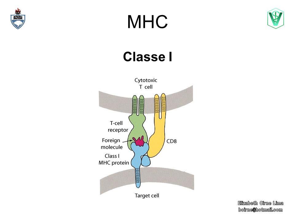 MHC Classe I Elizabeth Cirne Lima bcirne@hotmail.com