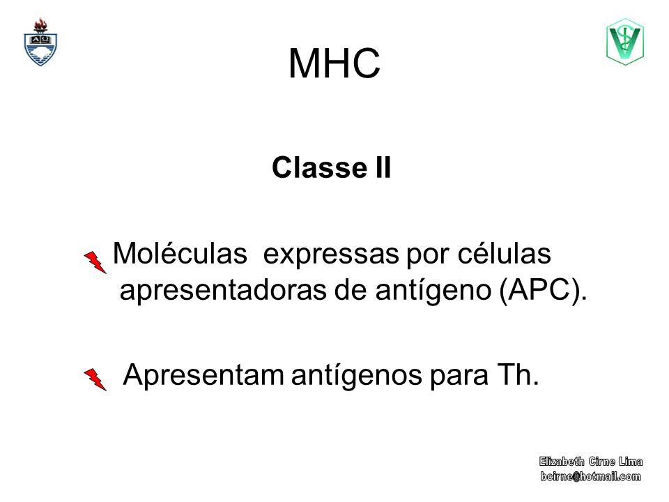 MHC Classe II. Moléculas expressas por células apresentadoras de antígeno (APC). Apresentam antígenos para Th.