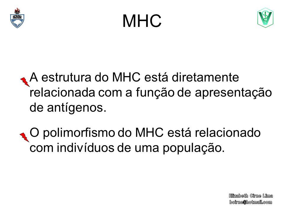 MHC A estrutura do MHC está diretamente relacionada com a função de apresentação de antígenos.