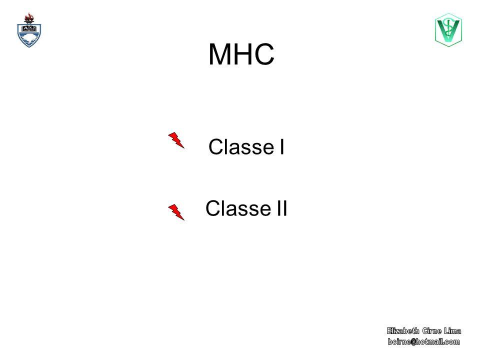 MHC Classe I Classe II Elizabeth Cirne Lima bcirne@hotmail.com