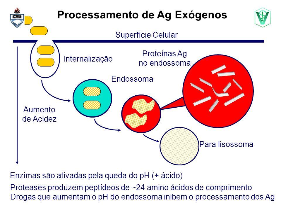 Processamento de Ag Exógenos