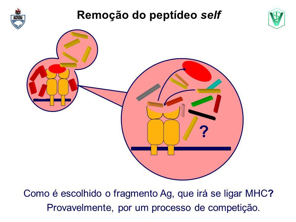 Remoção do peptídeo self