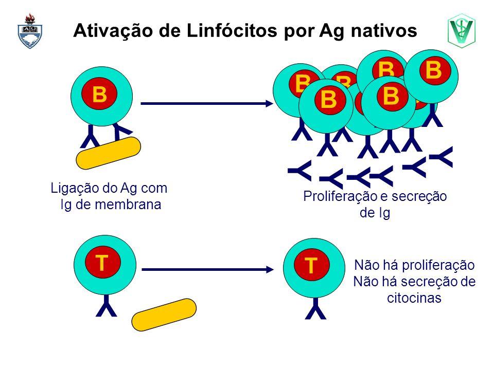 Ativação de Linfócitos por Ag nativos