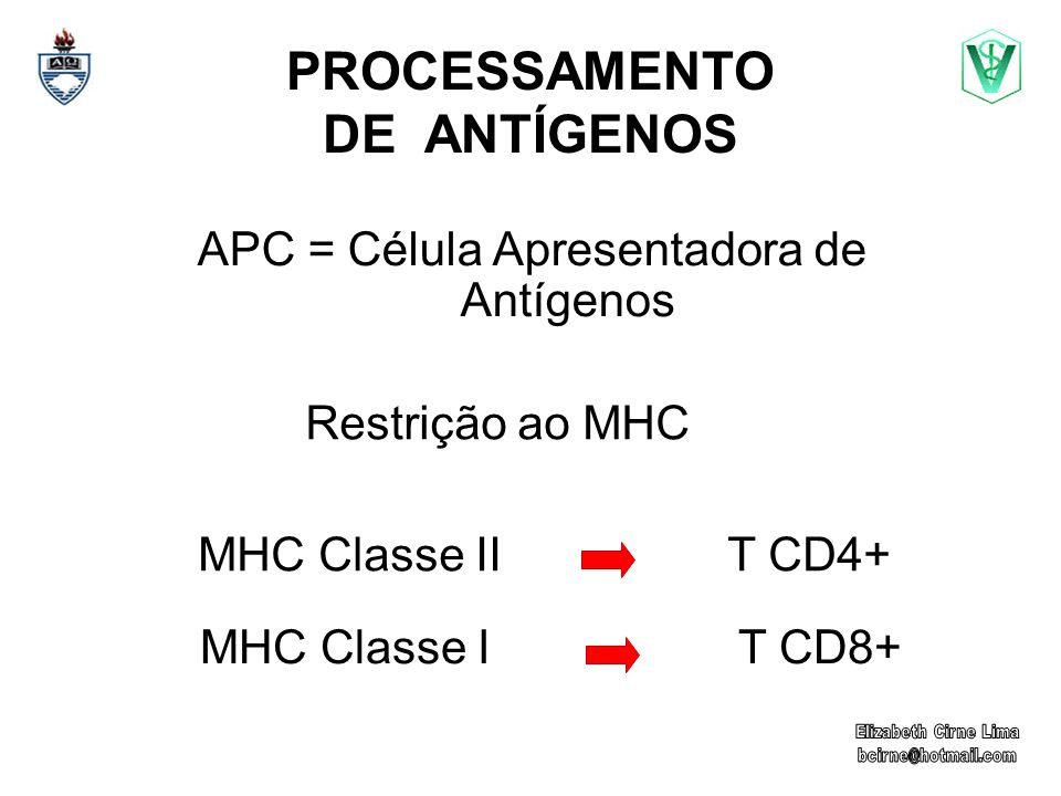 PROCESSAMENTO DE ANTÍGENOS