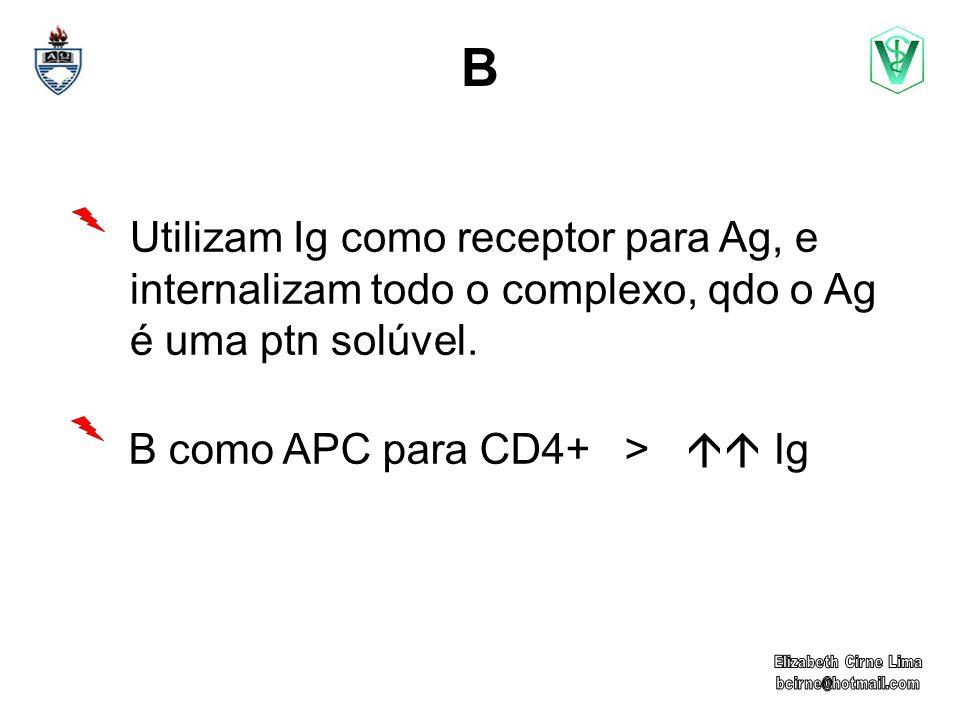 B Utilizam Ig como receptor para Ag, e internalizam todo o complexo, qdo o Ag é uma ptn solúvel. B como APC para CD4+ >  Ig.
