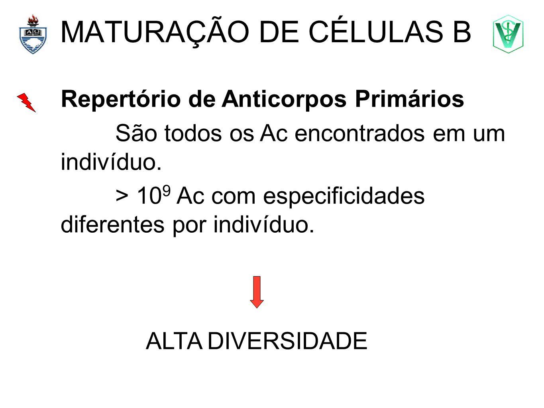 MATURAÇÃO DE CÉLULAS B Repertório de Anticorpos Primários