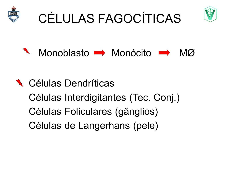 CÉLULAS FAGOCÍTICAS Monoblasto Monócito MØ Células Dendríticas