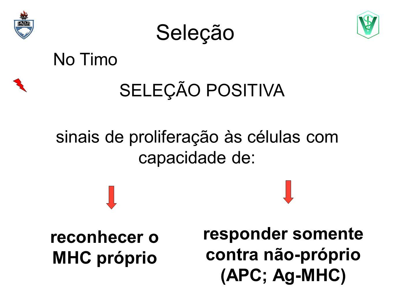 Seleção No Timo SELEÇÃO POSITIVA