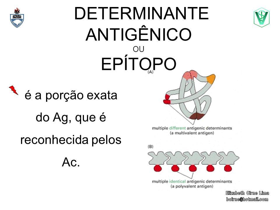 DETERMINANTE ANTIGÊNICO OU EPÍTOPO