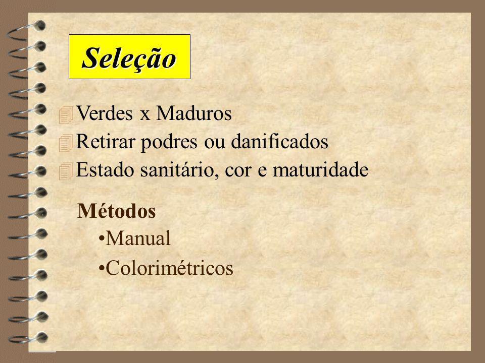 Seleção Verdes x Maduros Retirar podres ou danificados