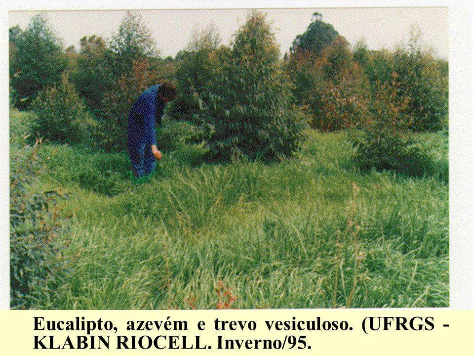 Eucalipto, azevém e trevo vesiculoso. (UFRGS - KLABIN RIOCELL