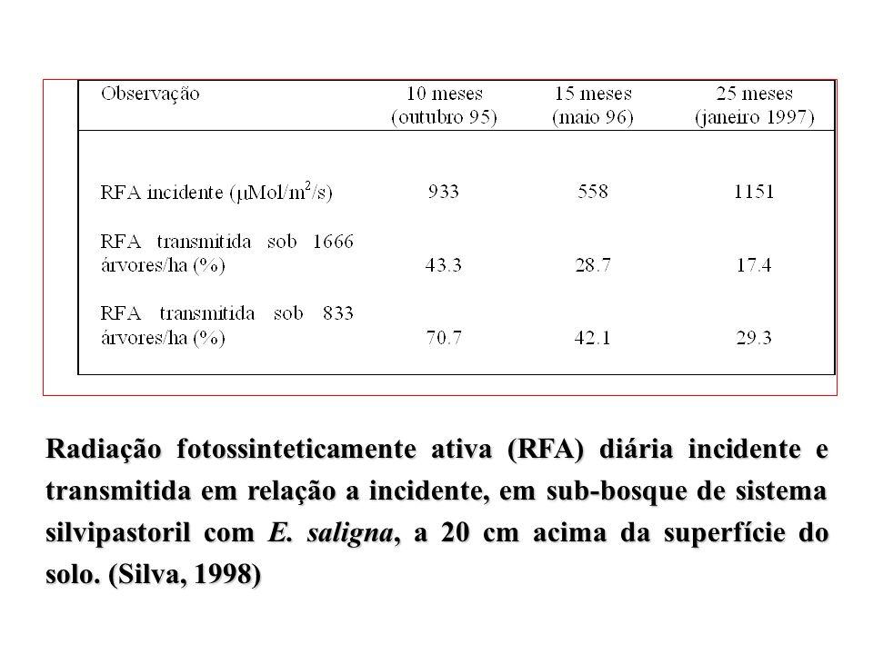 Radiação fotossinteticamente ativa (RFA) diária incidente e transmitida em relação a incidente, em sub-bosque de sistema silvipastoril com E.