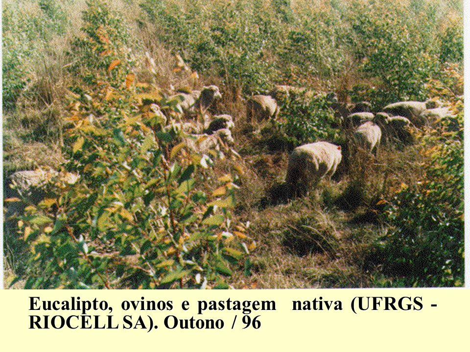 Eucalipto, ovinos e pastagem nativa (UFRGS - RIOCELL SA). Outono / 96