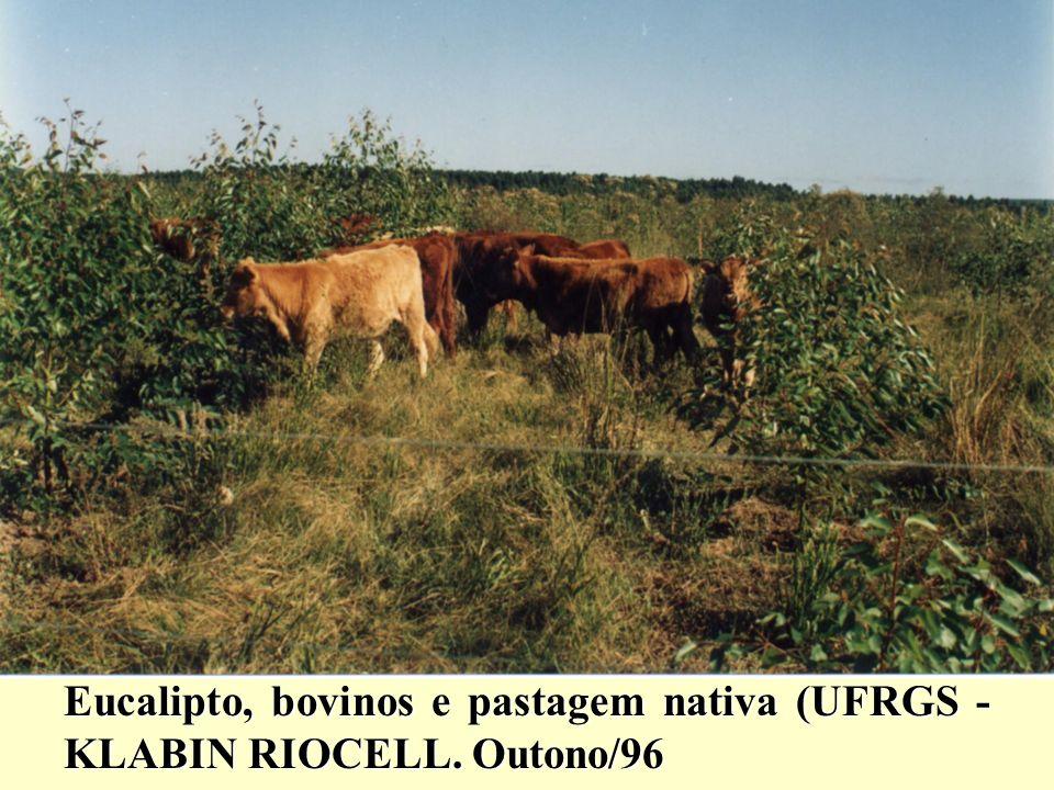 Eucalipto, bovinos e pastagem nativa (UFRGS - KLABIN RIOCELL. Outono/96