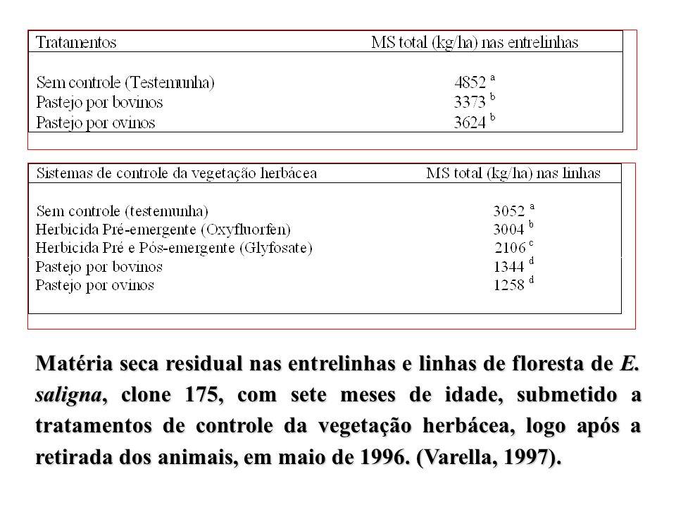 Matéria seca residual nas entrelinhas e linhas de floresta de E
