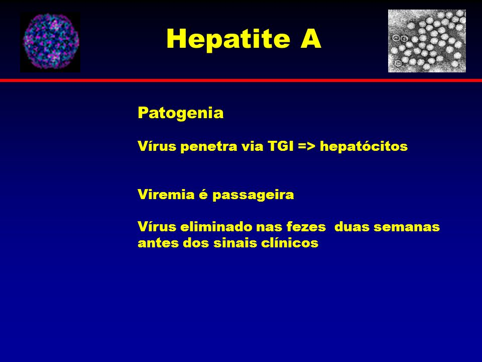 Hepatite A Patogenia Vírus penetra via TGI => hepatócitos