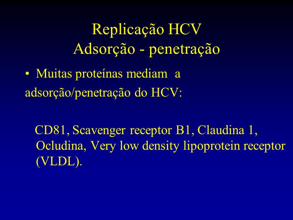 Replicação HCV Adsorção - penetração