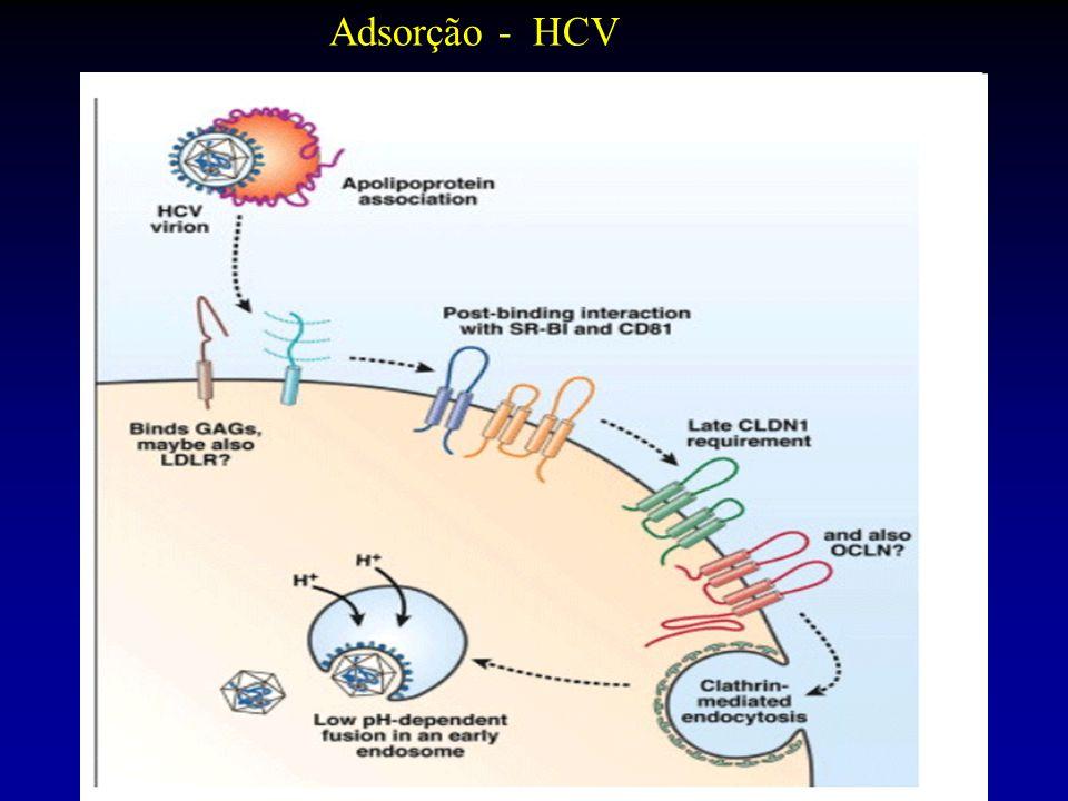 Adsorção - HCV