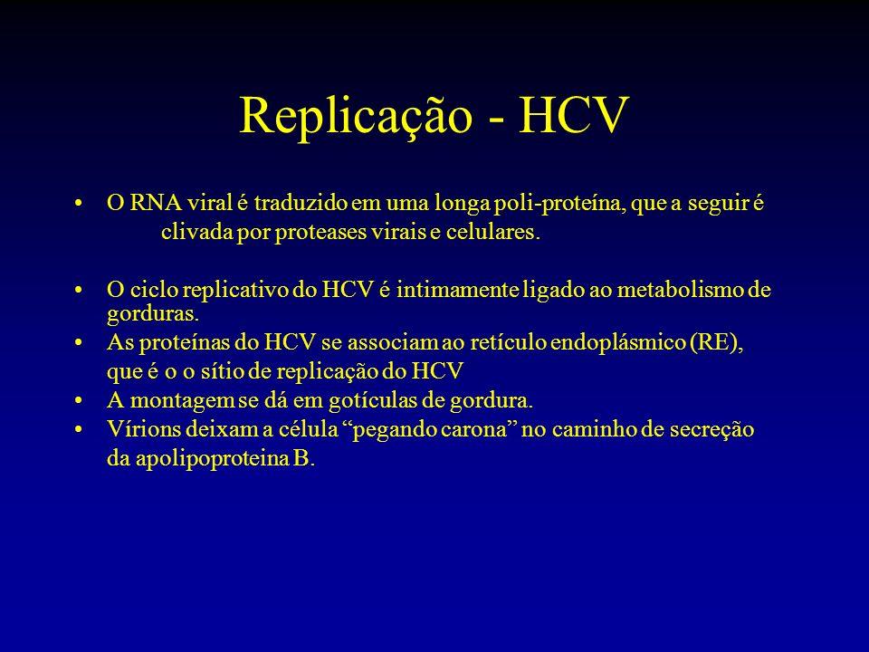 Replicação - HCVO RNA viral é traduzido em uma longa poli-proteína, que a seguir é. clivada por proteases virais e celulares.