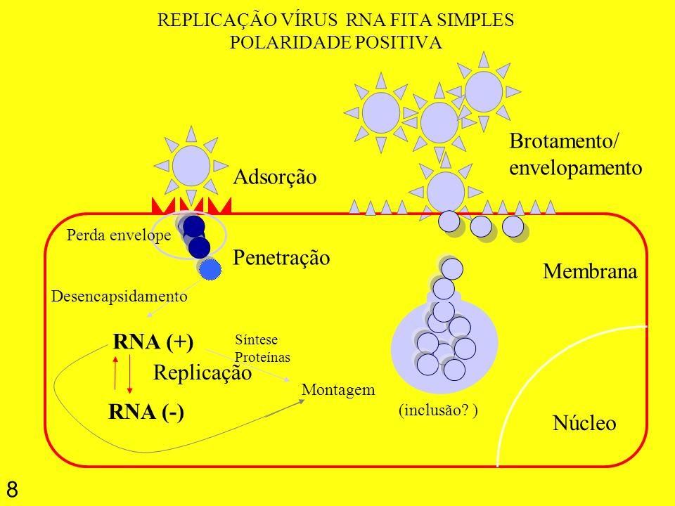 REPLICAÇÃO VÍRUS RNA FITA SIMPLES POLARIDADE POSITIVA