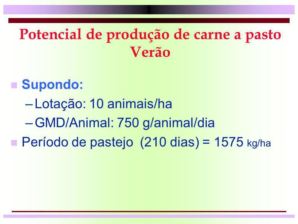 Potencial de produção de carne a pasto Verão