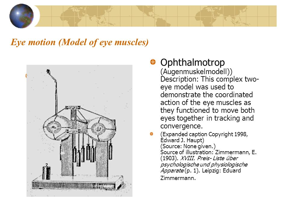 Eye motion (Model of eye muscles)