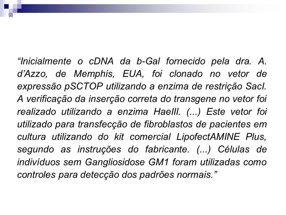Inicialmente o cDNA da b-Gal fornecido pela dra. A