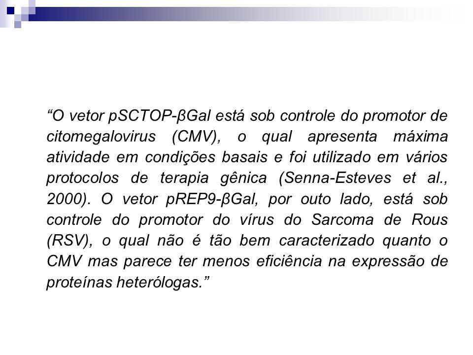 O vetor pSCTOP-βGal está sob controle do promotor de citomegalovirus (CMV), o qual apresenta máxima atividade em condições basais e foi utilizado em vários protocolos de terapia gênica (Senna-Esteves et al., 2000).