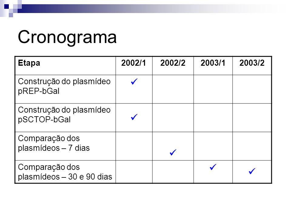 Cronograma  Etapa 2002/1 2002/2 2003/1 2003/2