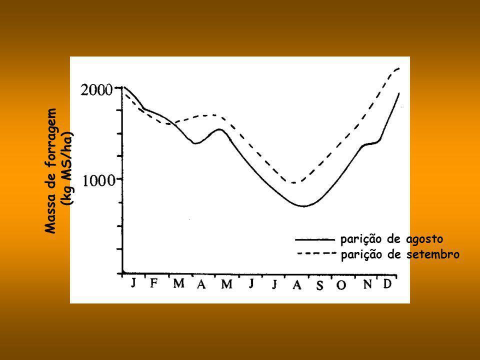 Massa de forragem (kg MS/ha)