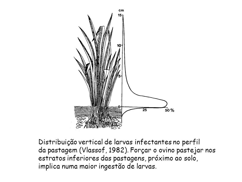 Distribuição vertical de larvas infectantes no perfil