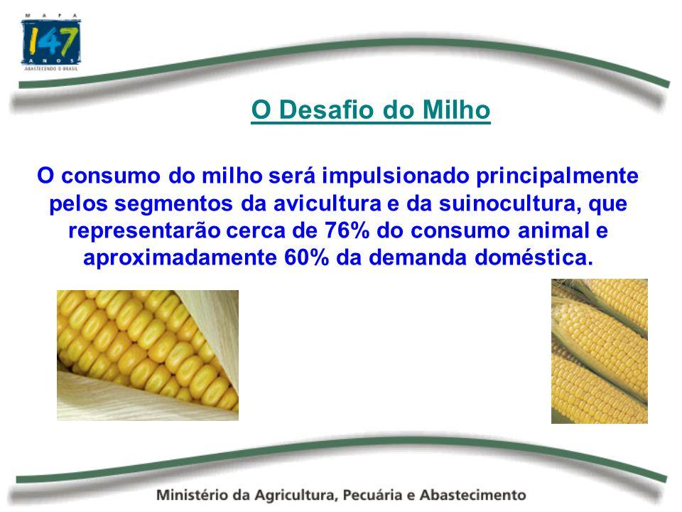 O Desafio do Milho