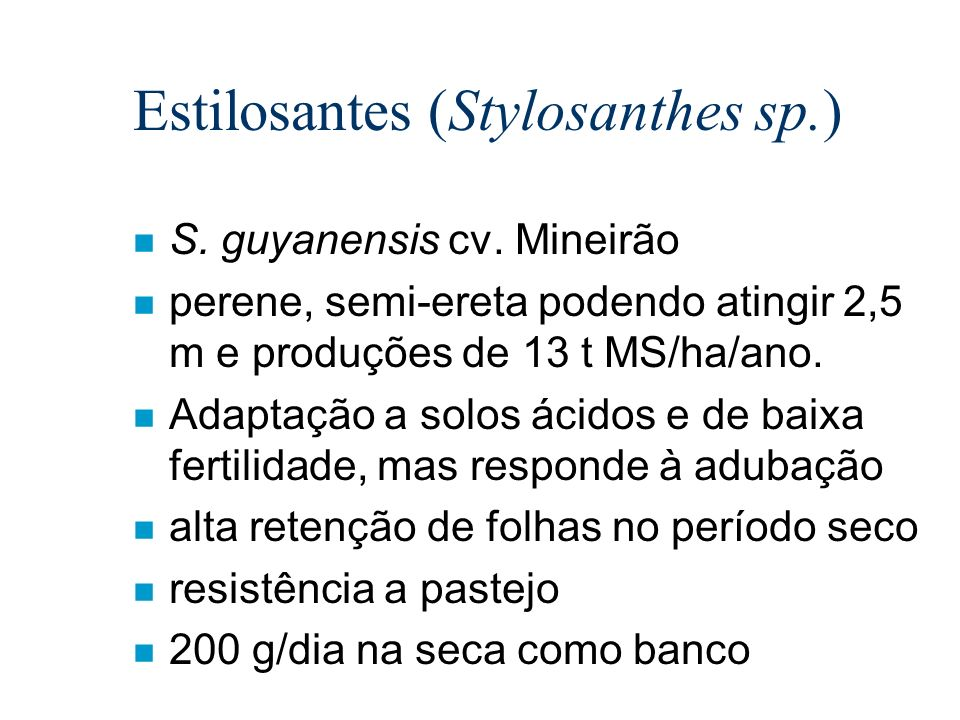 Estilosantes (Stylosanthes sp.)