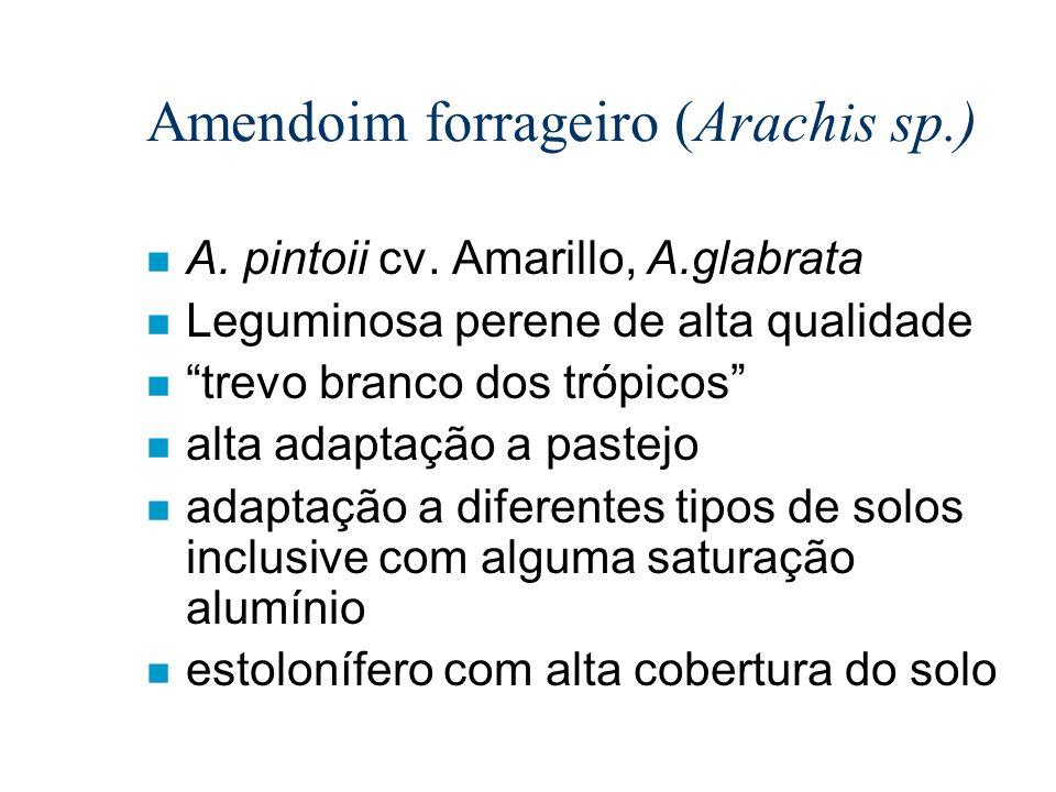 Amendoim forrageiro (Arachis sp.)