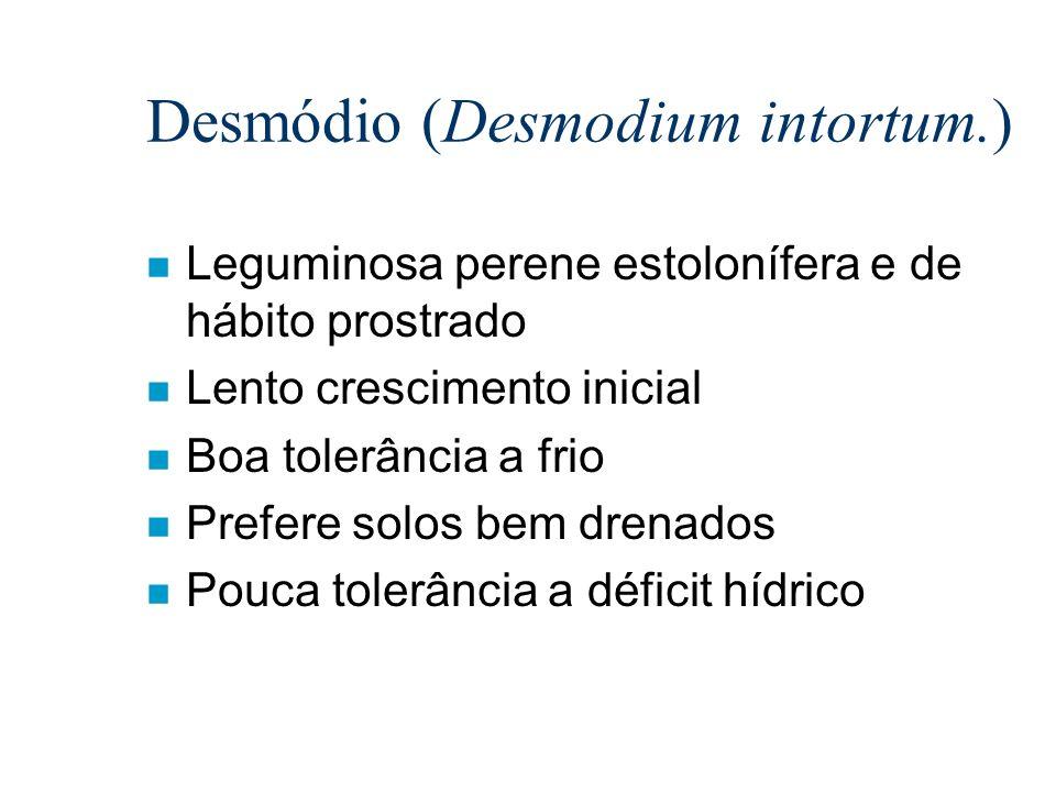 Desmódio (Desmodium intortum.)