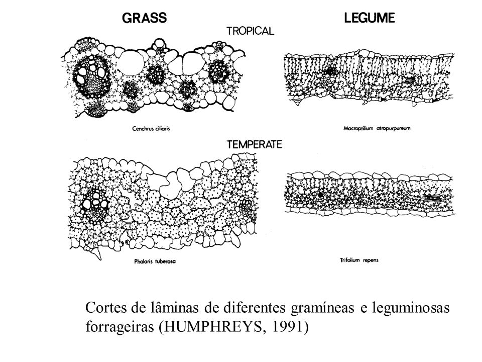 Cortes de lâminas de diferentes gramíneas e leguminosas
