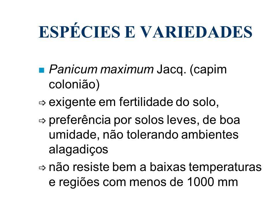 ESPÉCIES E VARIEDADES Panicum maximum Jacq. (capim colonião)