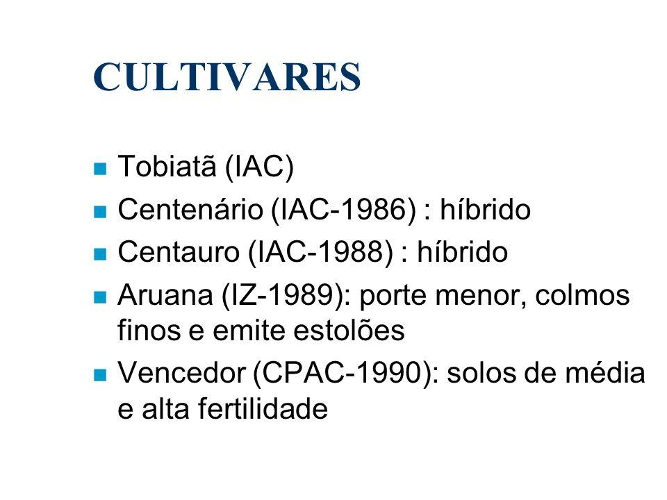 CULTIVARES Tobiatã (IAC) Centenário (IAC-1986) : híbrido