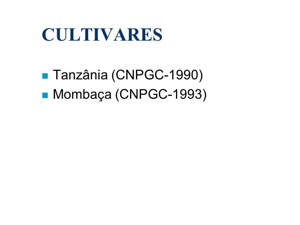 CULTIVARES Tanzânia (CNPGC-1990) Mombaça (CNPGC-1993)