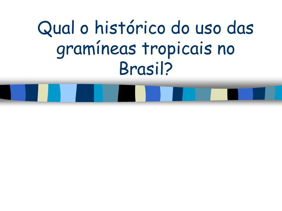 Qual o histórico do uso das gramíneas tropicais no Brasil