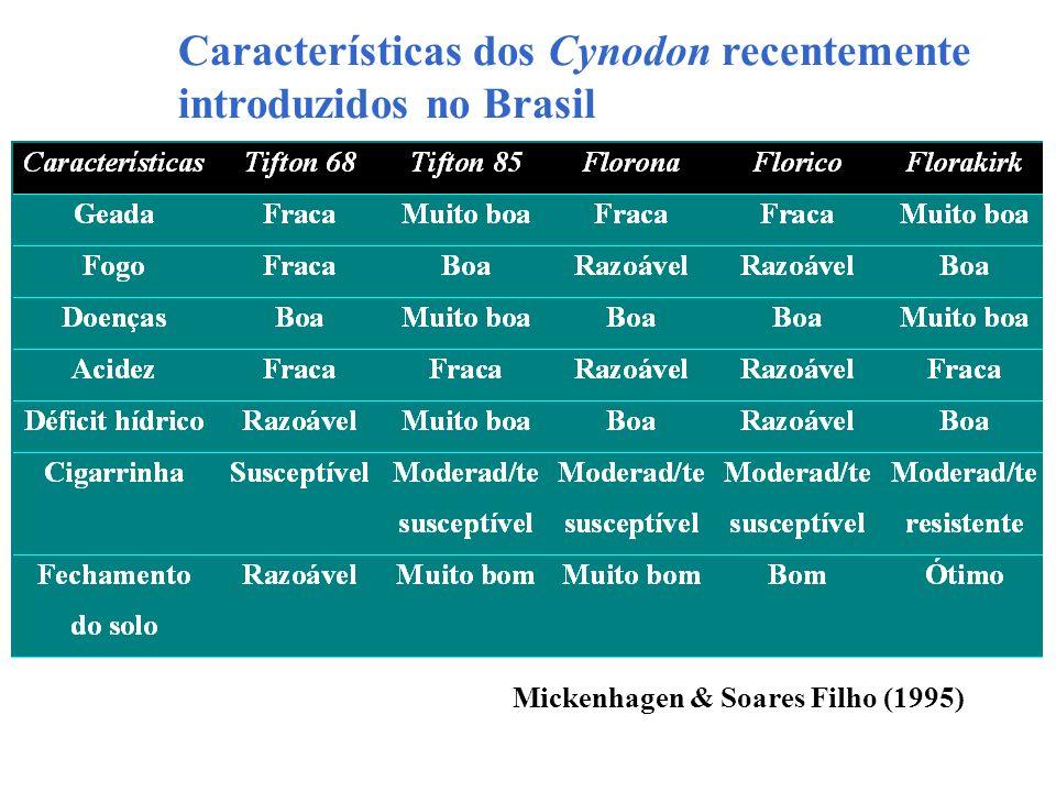 Características dos Cynodon recentemente introduzidos no Brasil