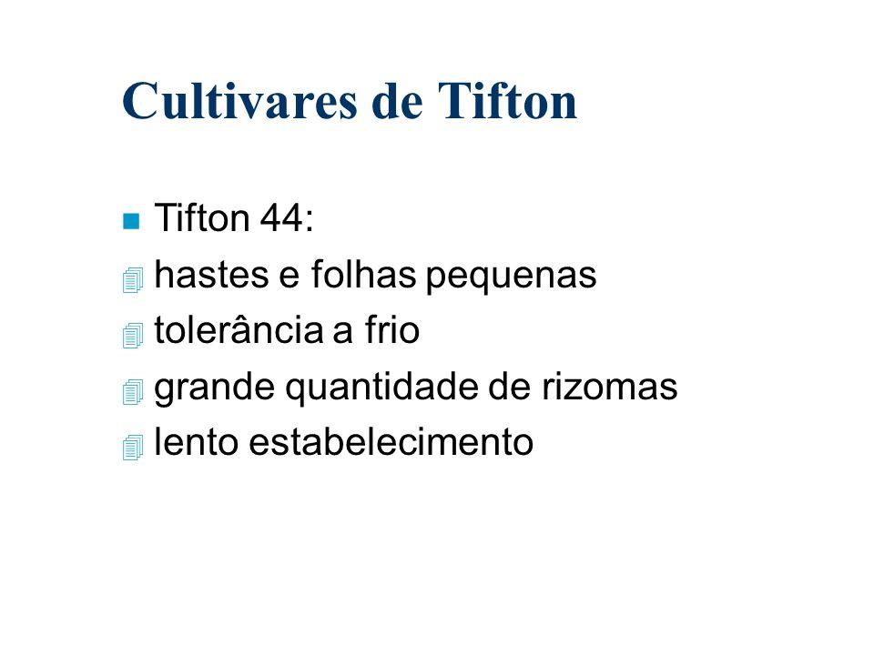Cultivares de Tifton Tifton 44: hastes e folhas pequenas