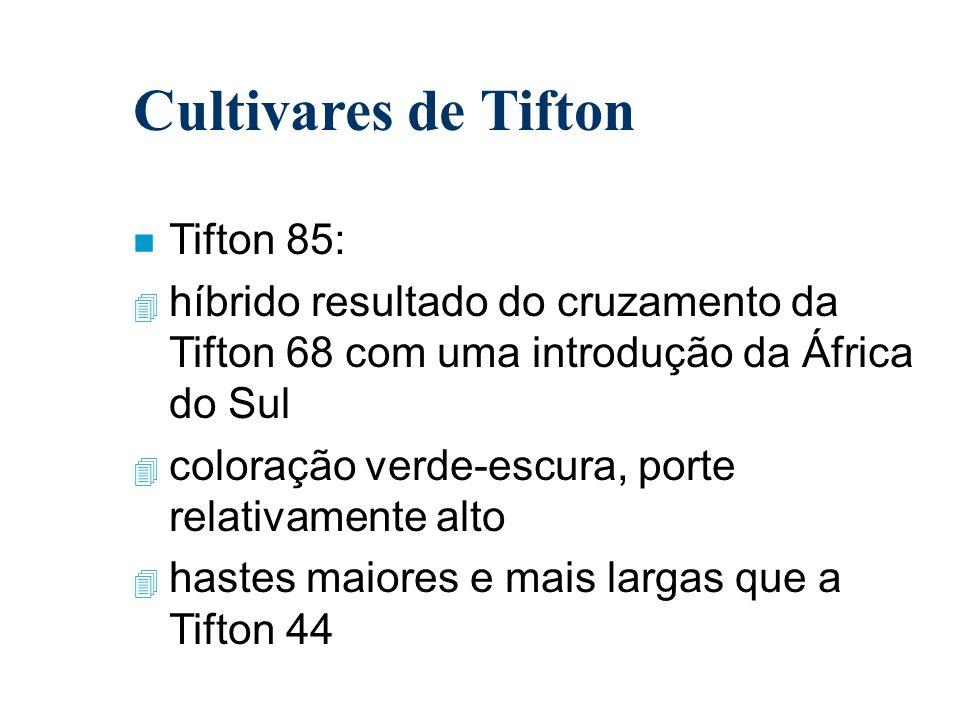 Cultivares de Tifton Tifton 85: