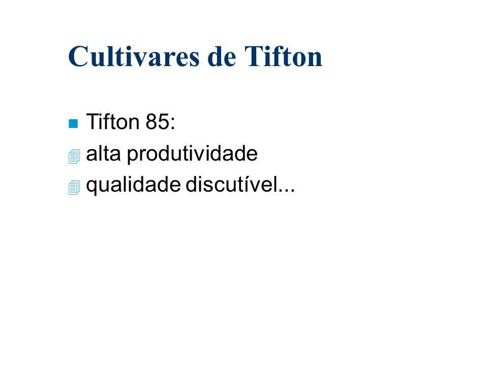 Cultivares de Tifton Tifton 85: alta produtividade