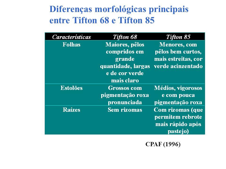 Diferenças morfológicas principais entre Tifton 68 e Tifton 85