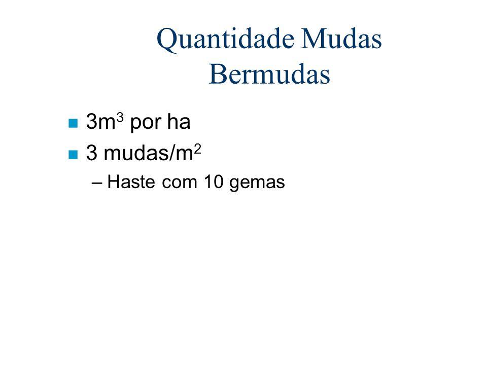 Quantidade Mudas Bermudas